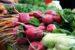 Terugluisteren: Interview met de voedselbank Amsterdam