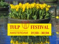 Tulpen IN Amsterdam!