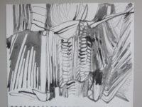 Springvossen 2 maart | Bettie van Haaster
