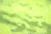 Springvossen 1 februari | Robert Zandvliet